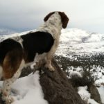 dogs and hiking