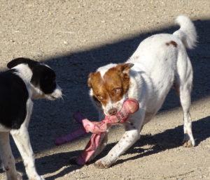 Peeko plays with Monty
